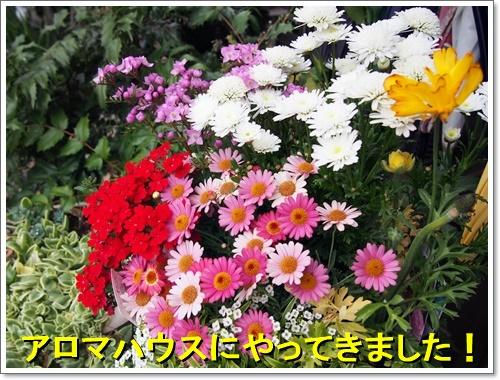 20160404_109.jpg