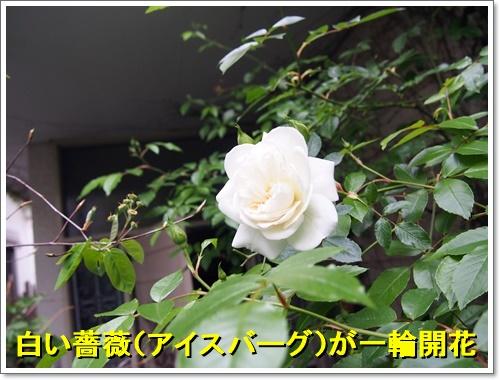 20160423_054.jpg