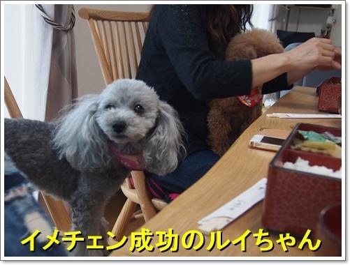20160517_010a.jpg