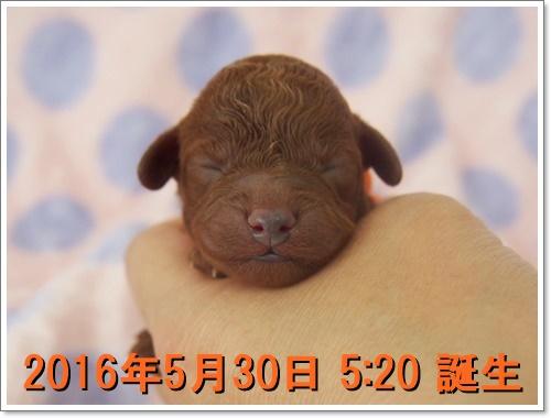 20160601_061.jpg