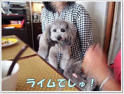 20160608_006.jpg
