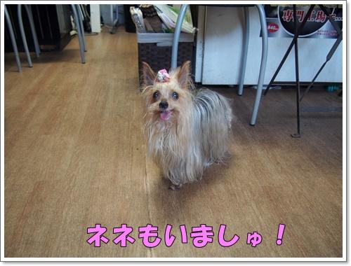 20160703_131.jpg