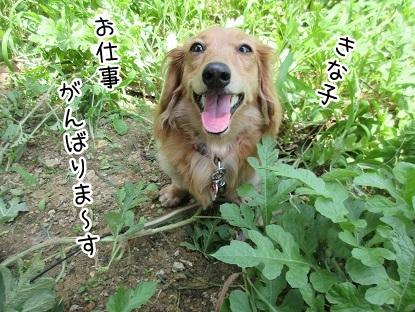 kinako5393.jpg