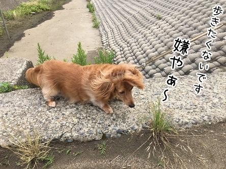 kinako5402.jpg