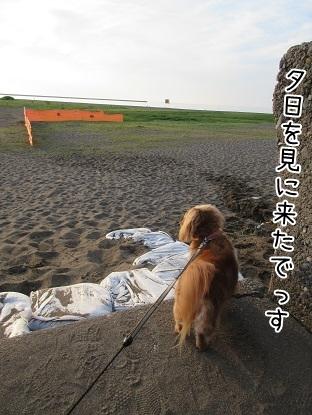 kinako5409.jpg