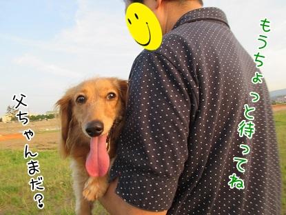 kinako5410.jpg