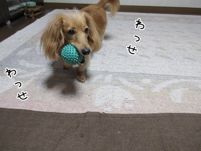 kinako5423.jpg