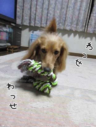 kinako5425.jpg