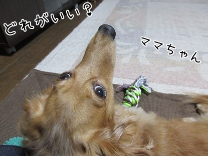 kinako5426.jpg