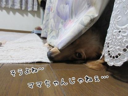 kinako5429.jpg