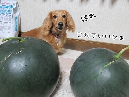 kinako5431.jpg