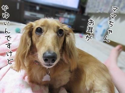 kinako5435.jpg