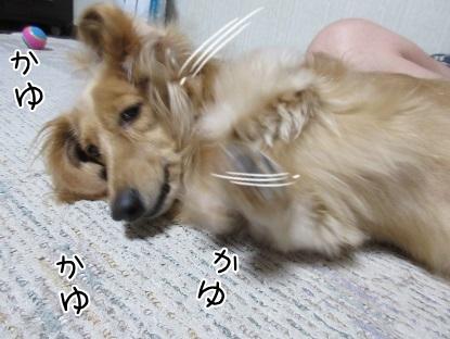 kinako5436.jpg