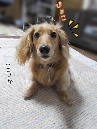 kinako5438.jpg