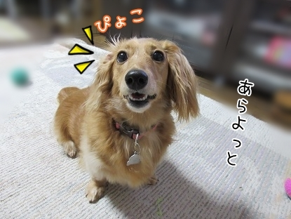 kinako5439.jpg