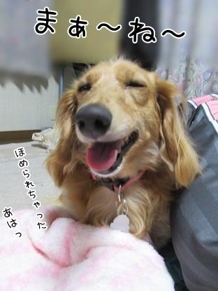 kinako5444.jpg