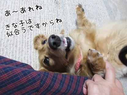 kinako5465.jpg