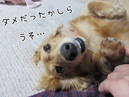 kinako5467.jpg