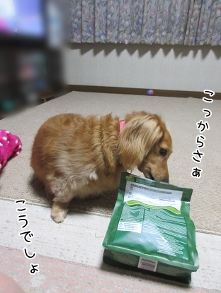 kinako5471.jpg