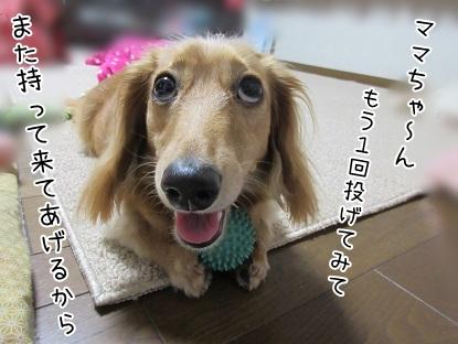 kinako5478.jpg