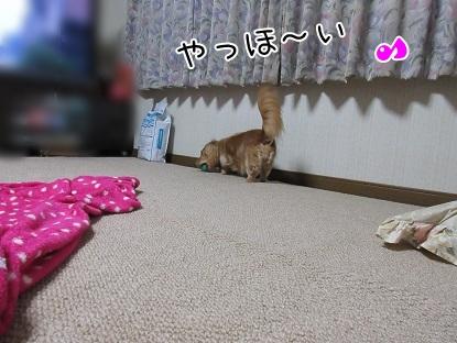 kinako5479.jpg