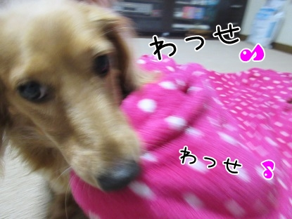 kinako5481.jpg