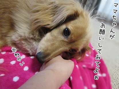 kinako5488.jpg