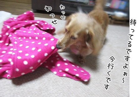 kinako5491.jpg