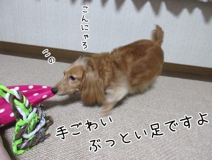 kinako5493.jpg