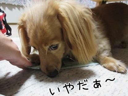 kinako5505.jpg
