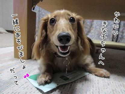 kinako5509.jpg