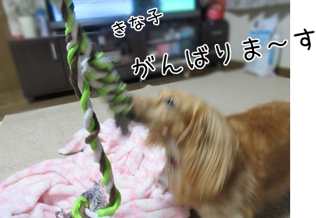 kinako5514.jpg