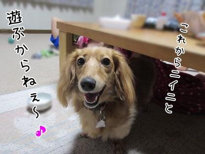 kinako5524.jpg