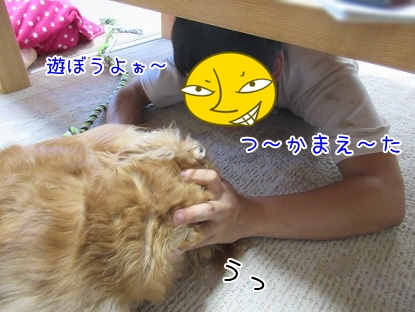 kinako5533.jpg