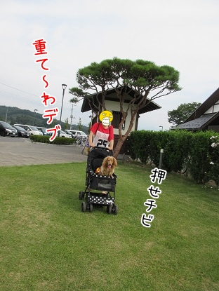 kinako5548.jpg
