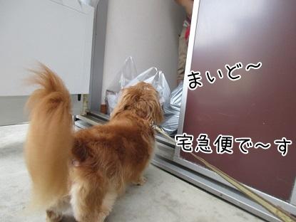 kinako5564.jpg