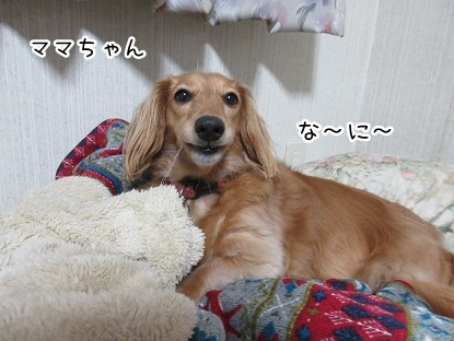 kinako5572.jpg