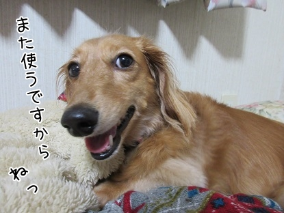 kinako5575.jpg