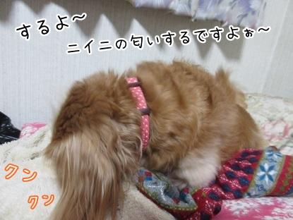 kinako5576.jpg