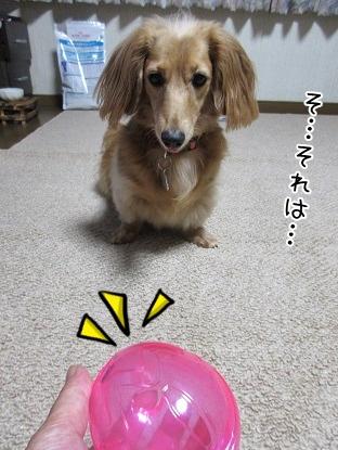 kinako5586.jpg