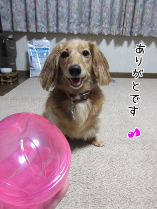 kinako5587.jpg