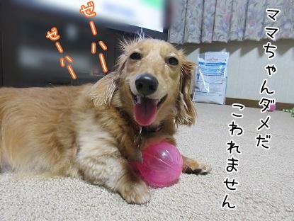 kinako5594.jpg