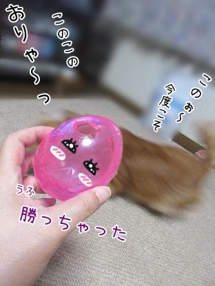 kinako5597.jpg