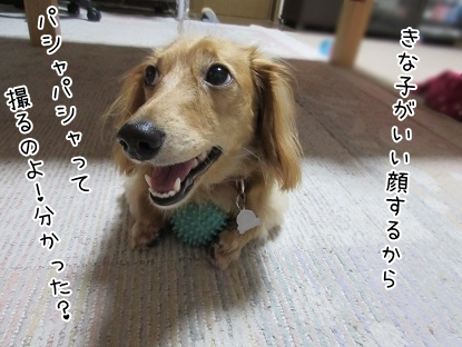 kinako5601.jpg