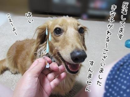 kinako5609.jpg