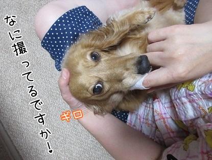 kinako5610.jpg
