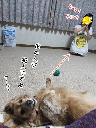 kinako5636.jpg