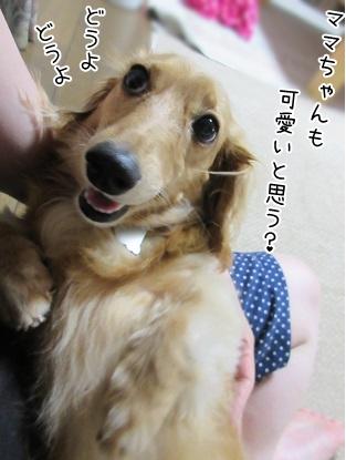 kinako5640.jpg