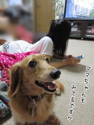 kinako5647.jpg