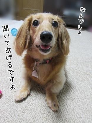 kinako5650.jpg